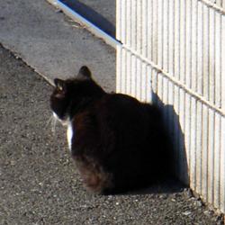 051220_cat01