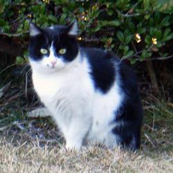 051220_cat02