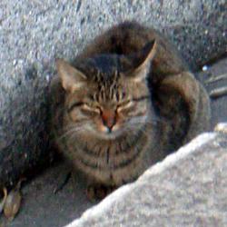 051220_cat03